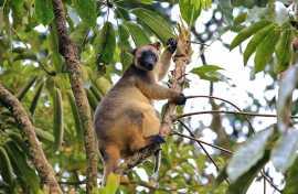 Kui Parks, Millaa Millaa Tourist Park, Tree Kangaroo