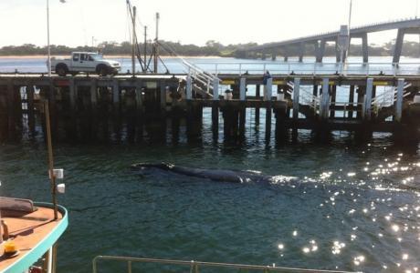 Kui Parks, Cowes, Beach Park Tourist Caravan Park, Whale