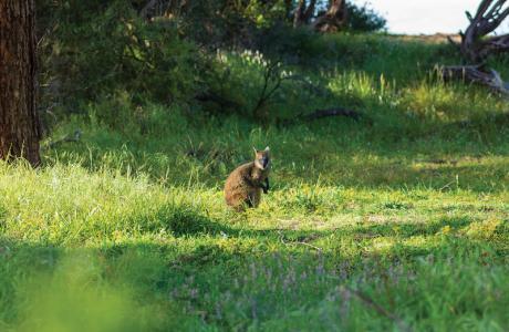 Kui Parks, Cowes, Beach Park Tourist Caravan Park, Wallaby