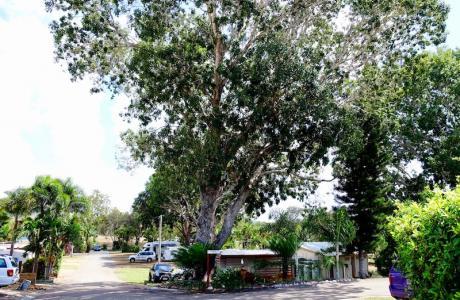 Kui Parks, Bush Oasis Caravan Park, Townsville, Sites