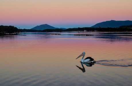 Kui Parks, Diamond Waters Caravan Park, Dunbogan, Camden River