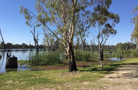 Kui Parks, Kingston on Murray Caravan Park, Murray River