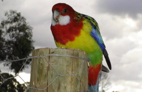 Kui Parks, Nicholson, Bushland Cabin & Caravan Park, Birdlife