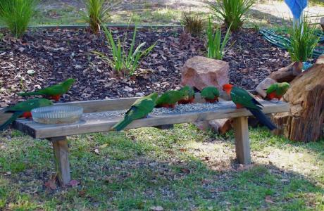 Kui Parks, Nicholson, Bushland Cabin & Caravan Park