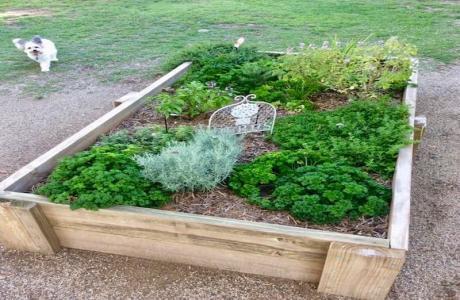 Kui Parks, Monto Caravan Park, Herb Garden