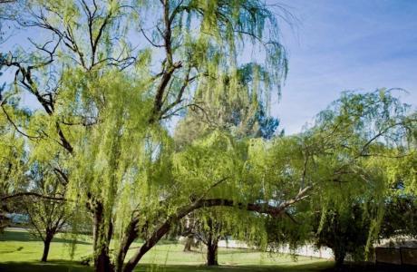 Kui Parks, Moss Vale Village Park
