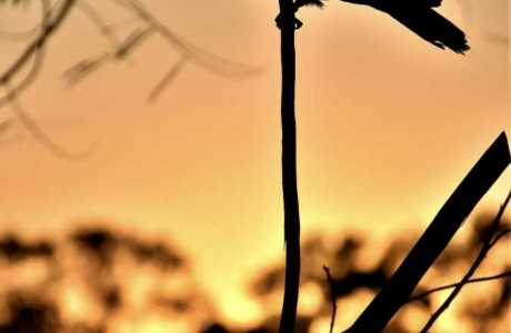 Kui Parks, Mount Larcom Tourist Park, Birdlife