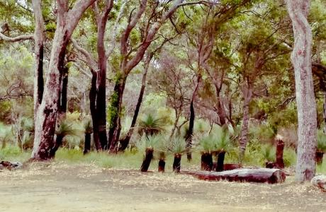 Kui Parks, Munday Camp Ground, Augusta, SItes