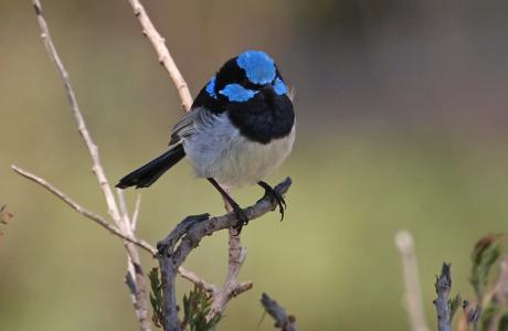 Kui Parks, Padthaway Caravan Park, Birds