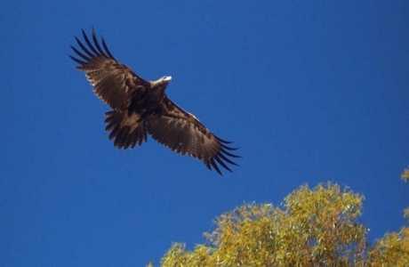 Quorn Caravan Park, Kui Parks, Eagle